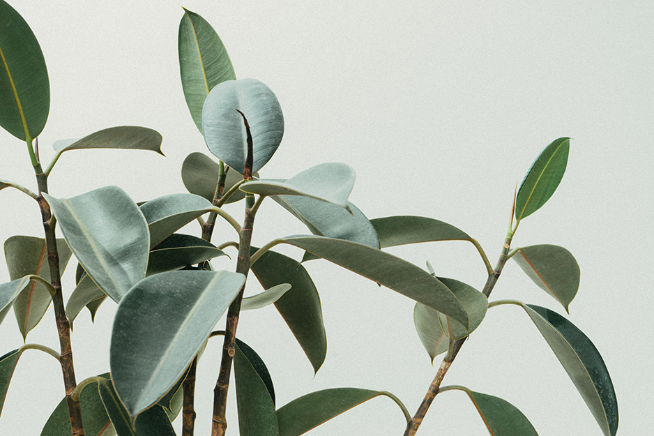 Six must-haves for lovers of houseplants