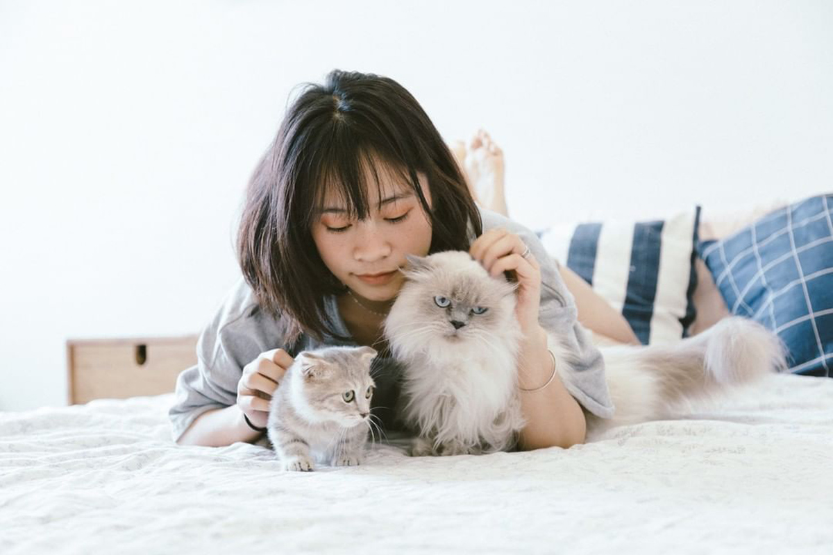 You're probably petting your cat wrong