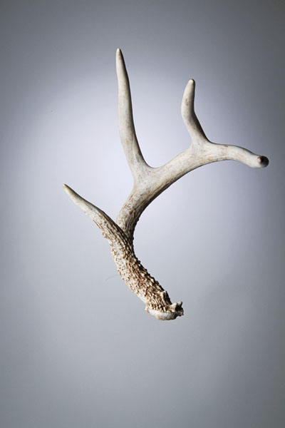Bone Guide: How to Estimate the Price of Shed Antlers