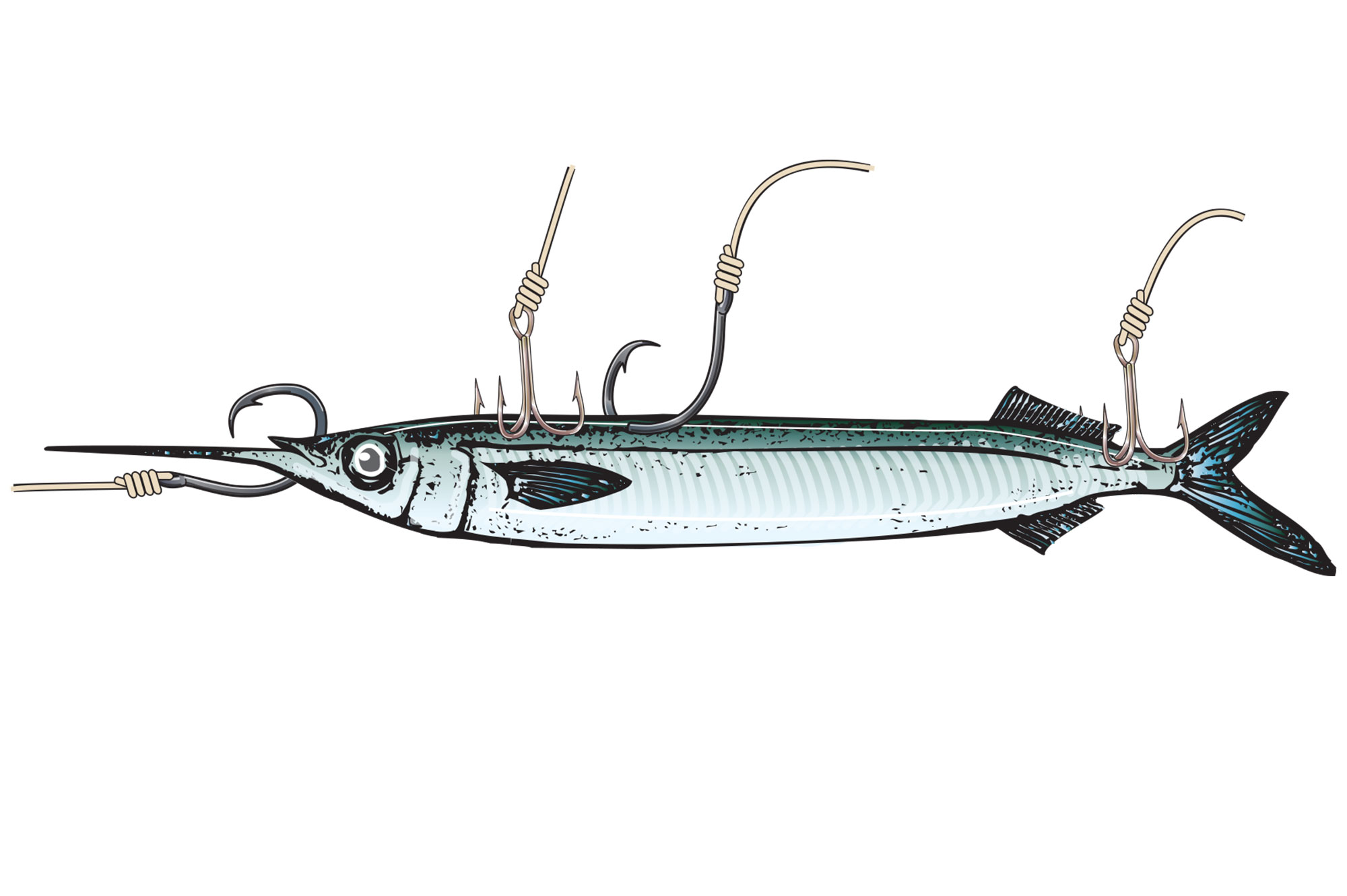 Catch More with Live Fish Bait | Sport Fishing Magazine