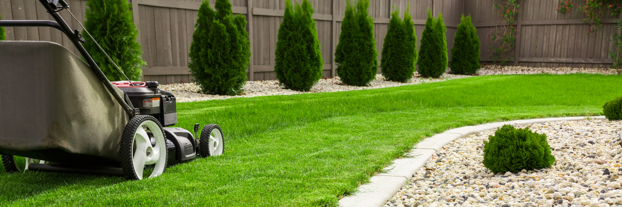 Grass isn't always greener—here's what to plant instead
