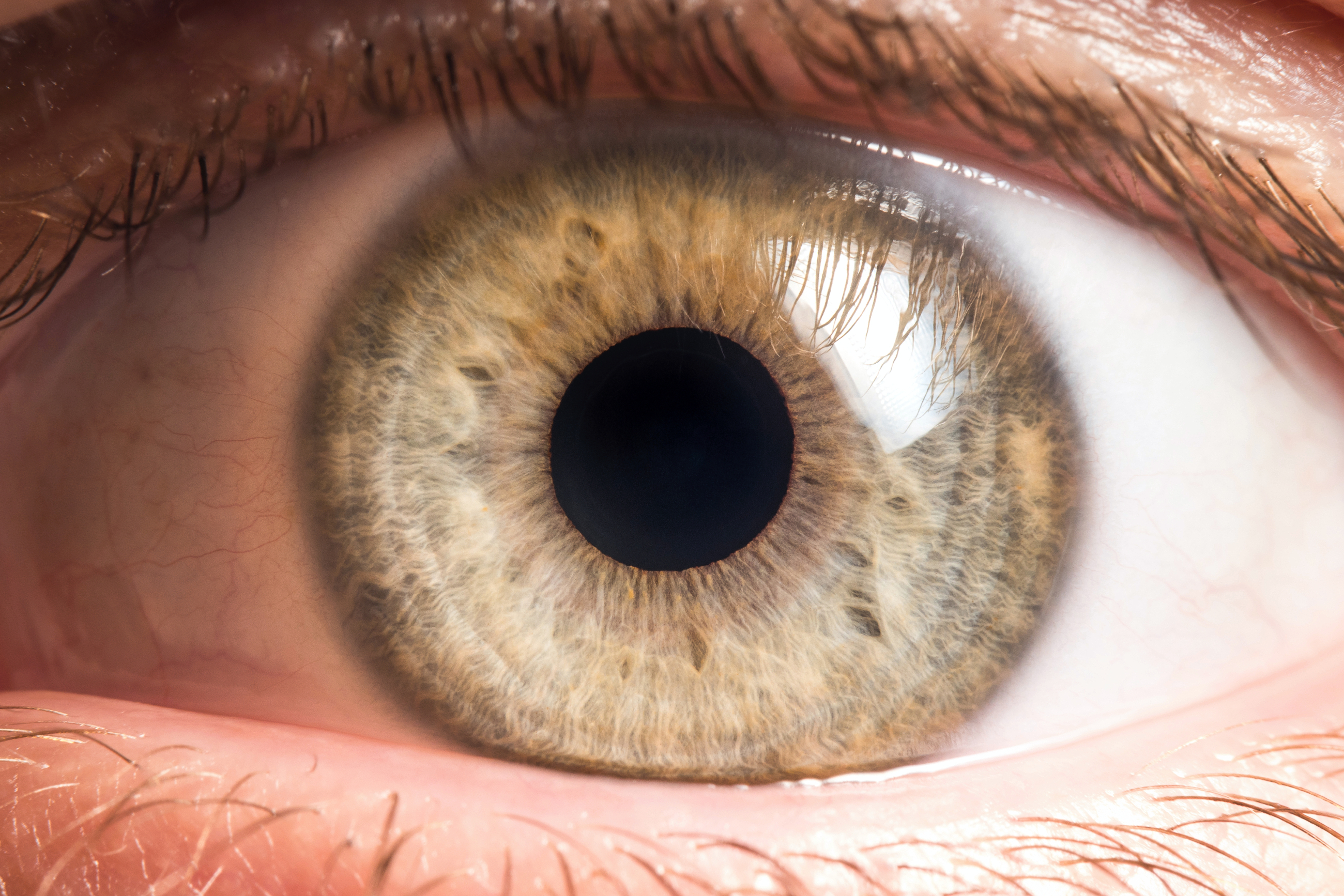 'Prob-eye-otics' could be the future of eye disease treatment
