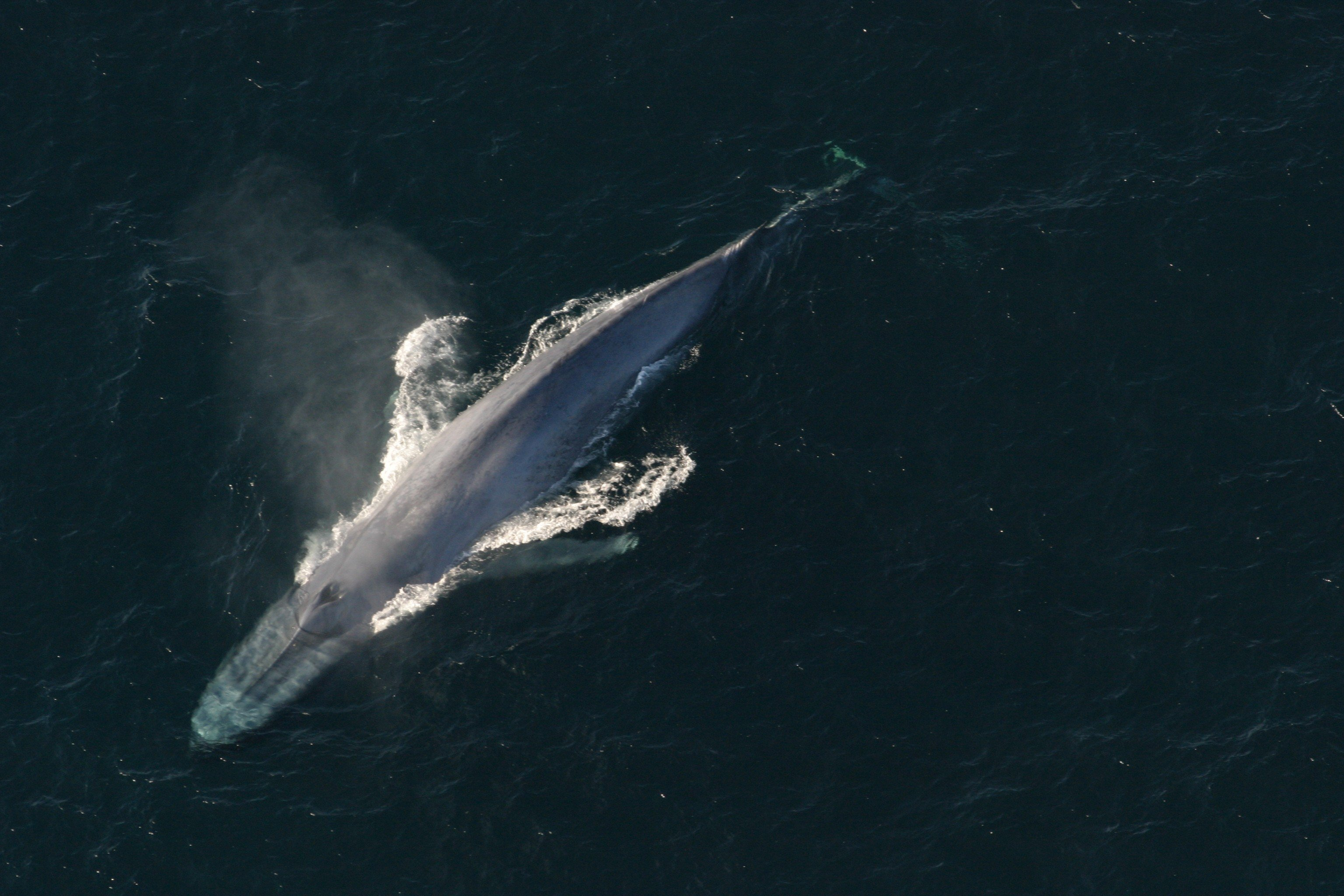 What's big, lives underwater, and fights climate change with its body and booty? Whale give you one guess.