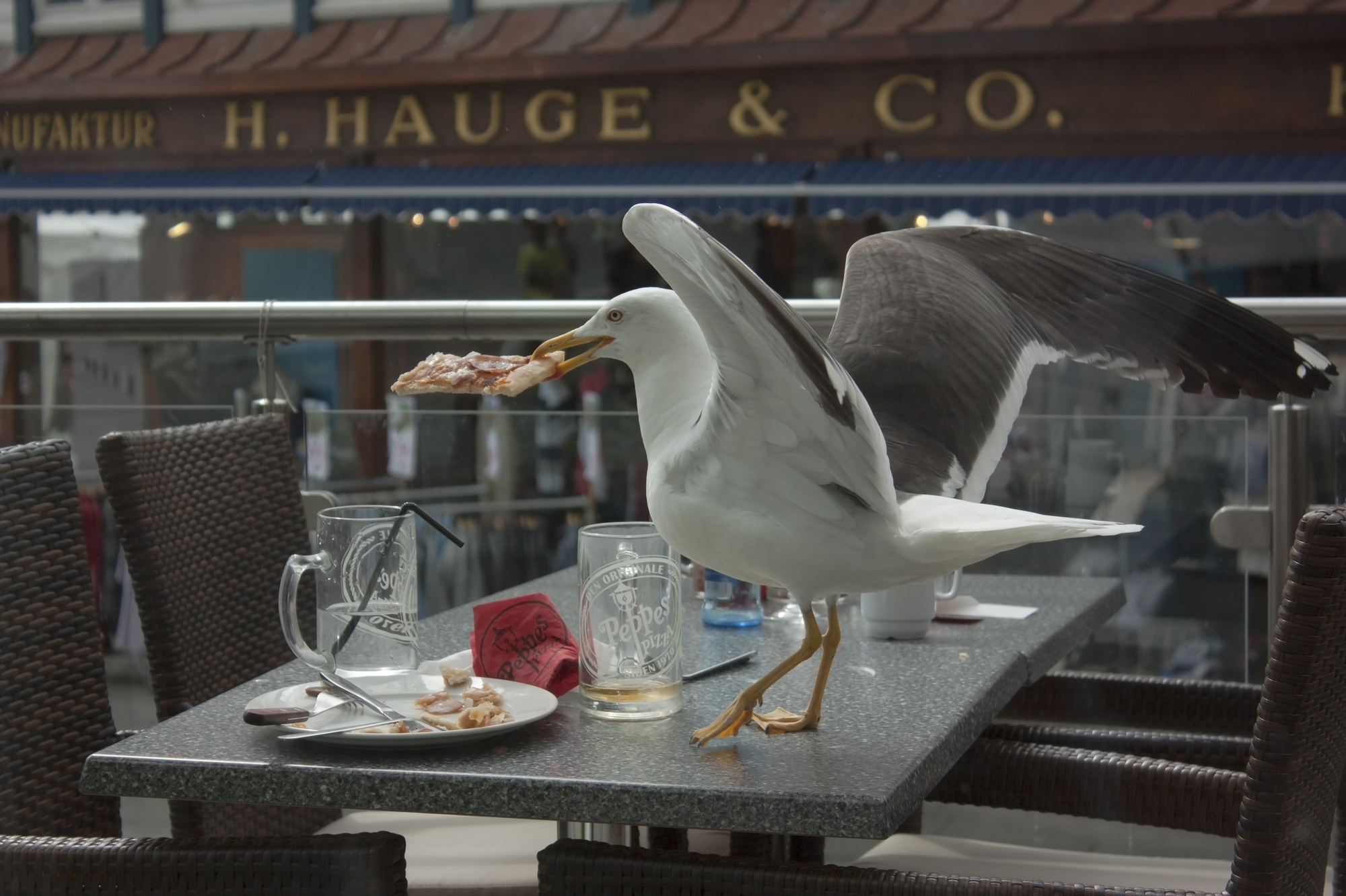 Seagulls hunger for food touched by human hands