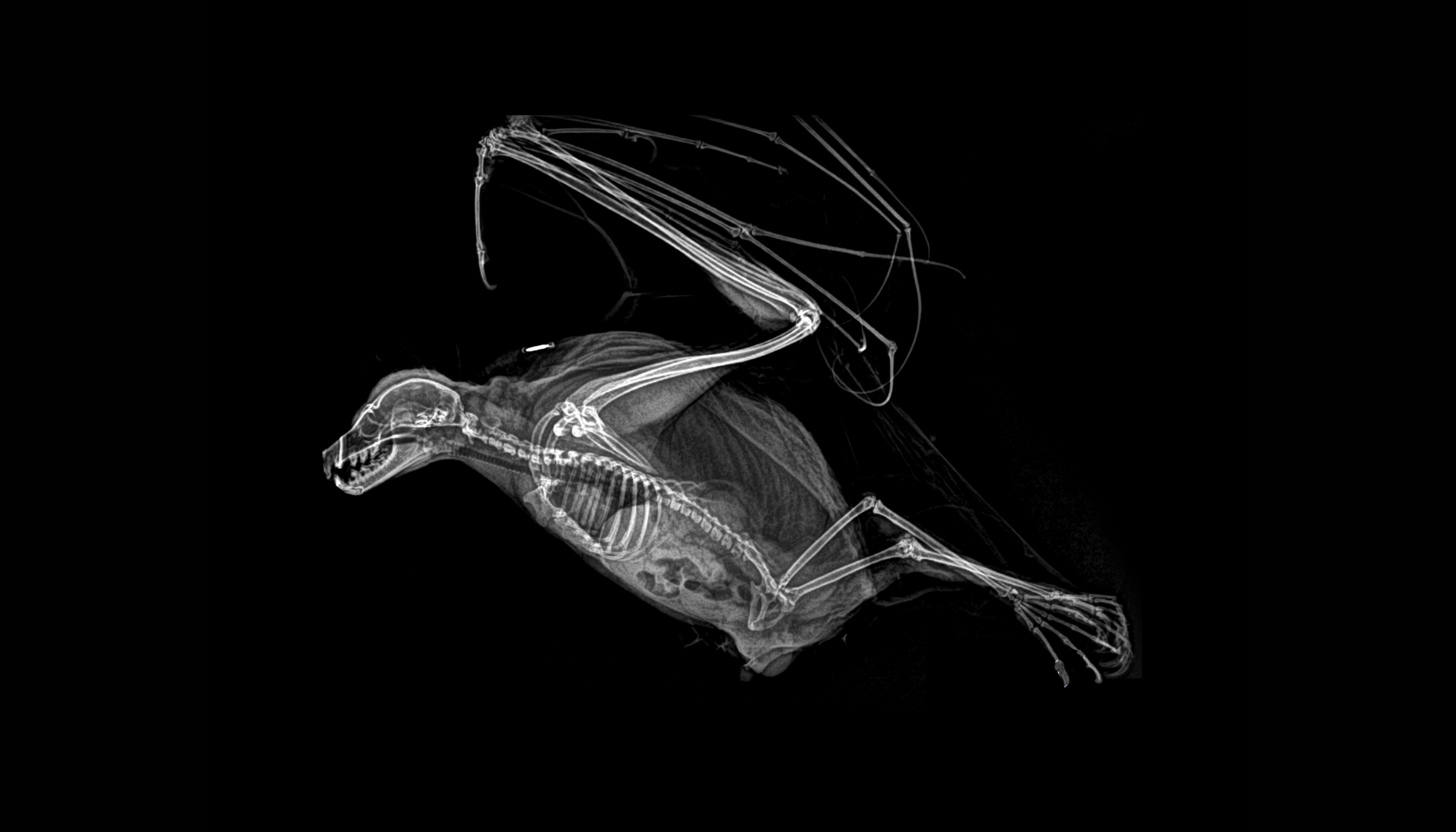 MEGAPIXELS: Spooky animal x-rays are exactly as cool as you'd imagine