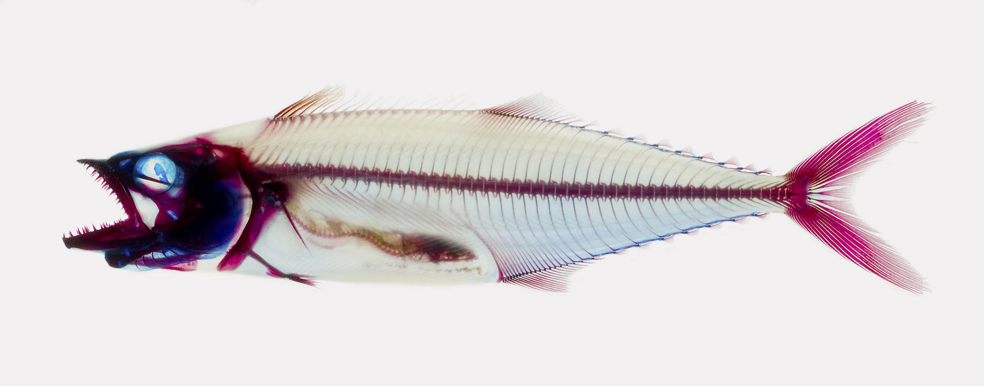 Fish gave us legs—and four other finny facts