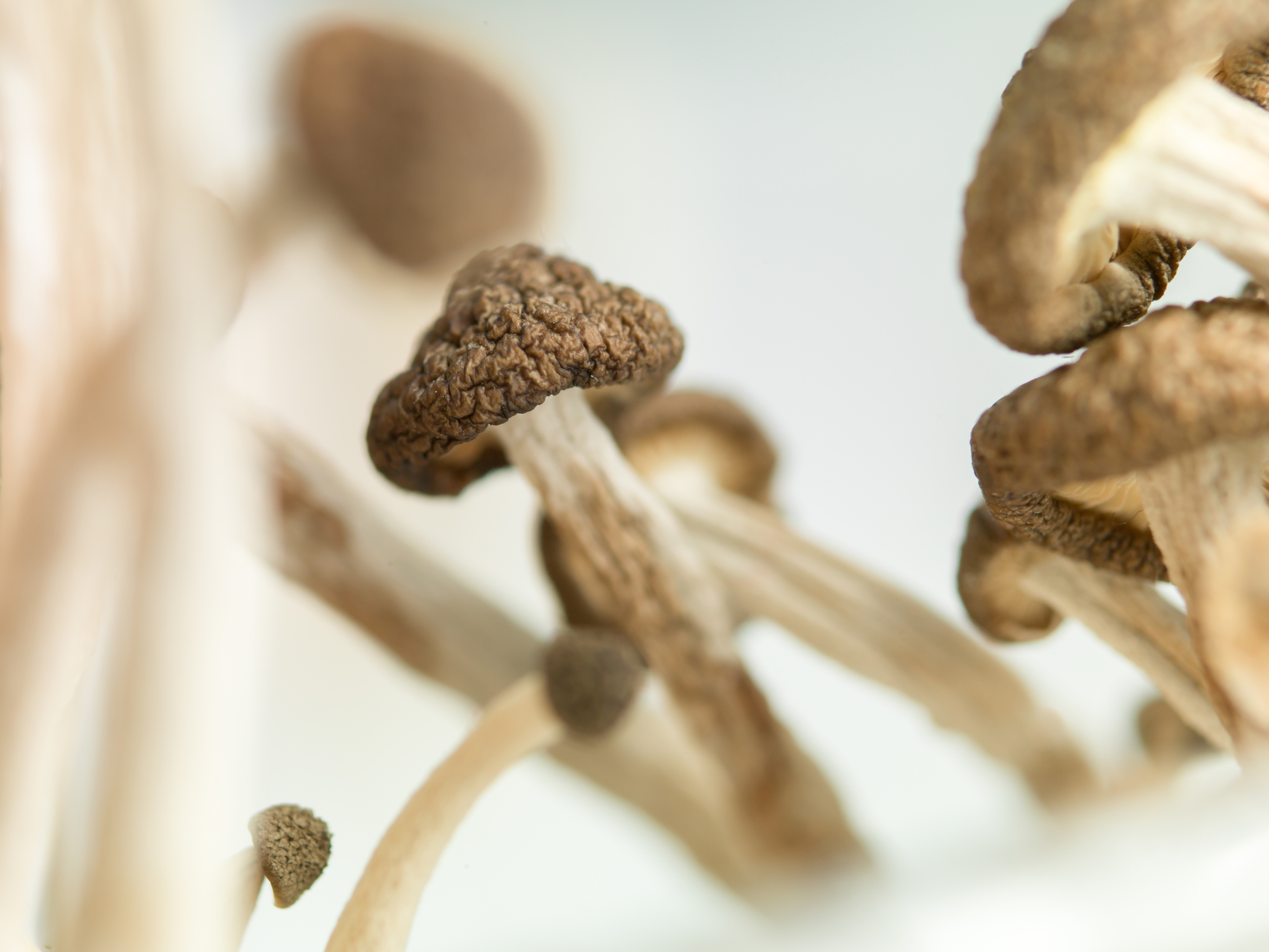 The FDA is fast-tracking a second psilocybin drug to treat depression