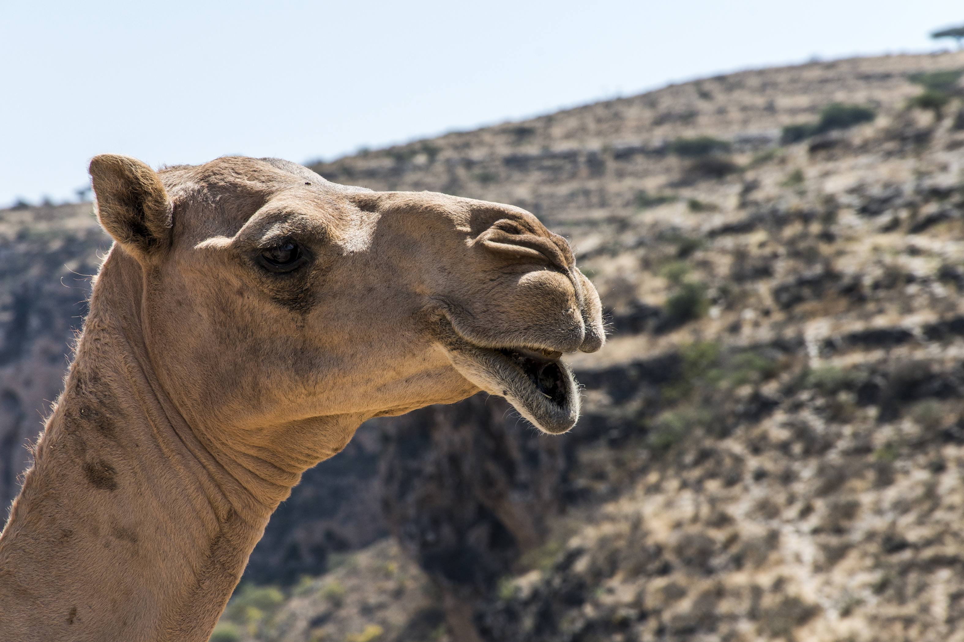 The weirdest things we learned this week: Nazis ate camel poop and pregnancy tests spread a fungal plague