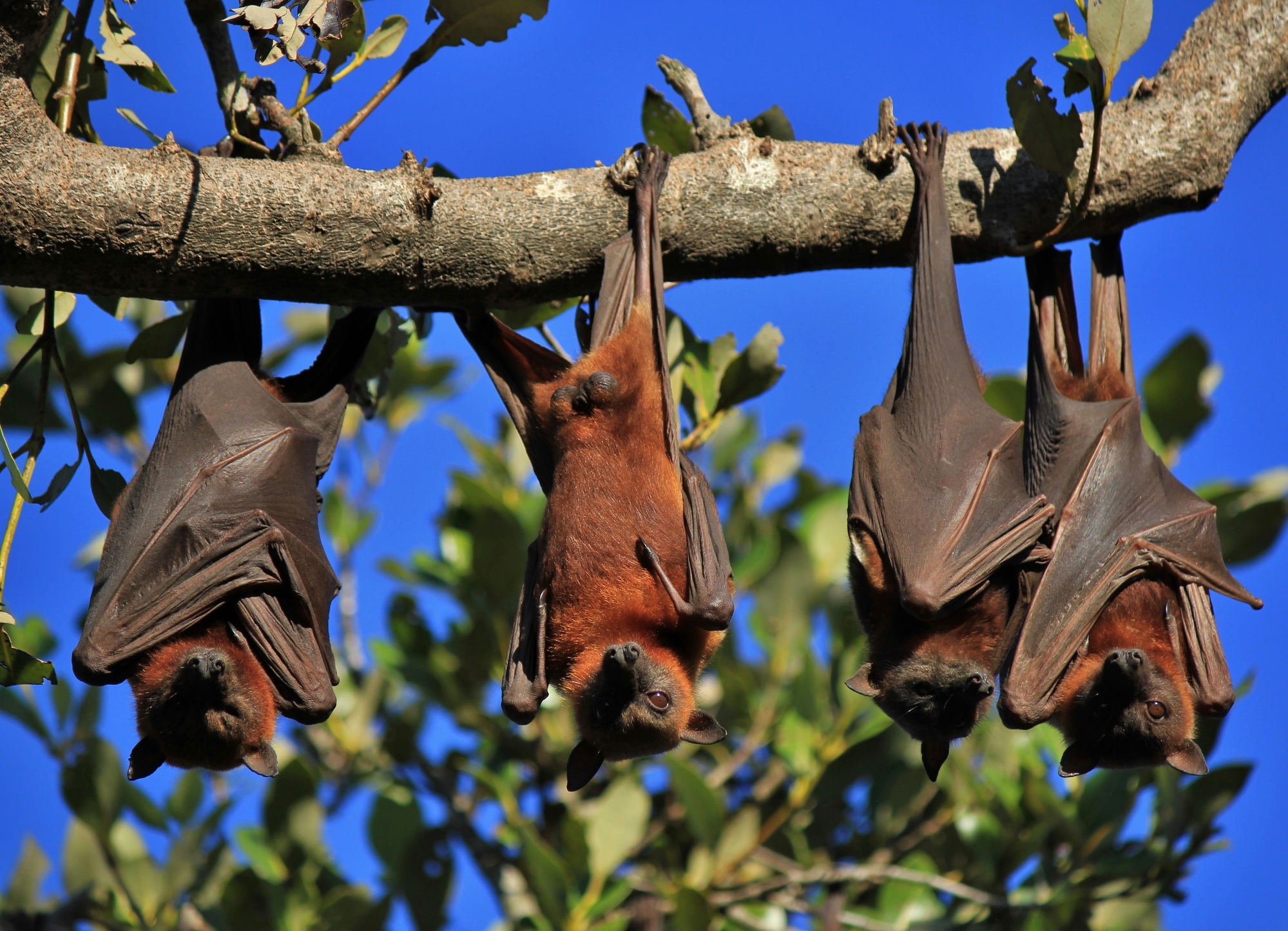 It's time to start paying attention to Nipah virus