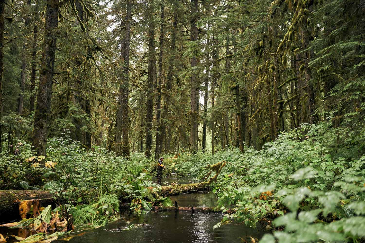 The Forest Service wants to open 9.2 million acres to potential logging. Here's your chance to say something about it.