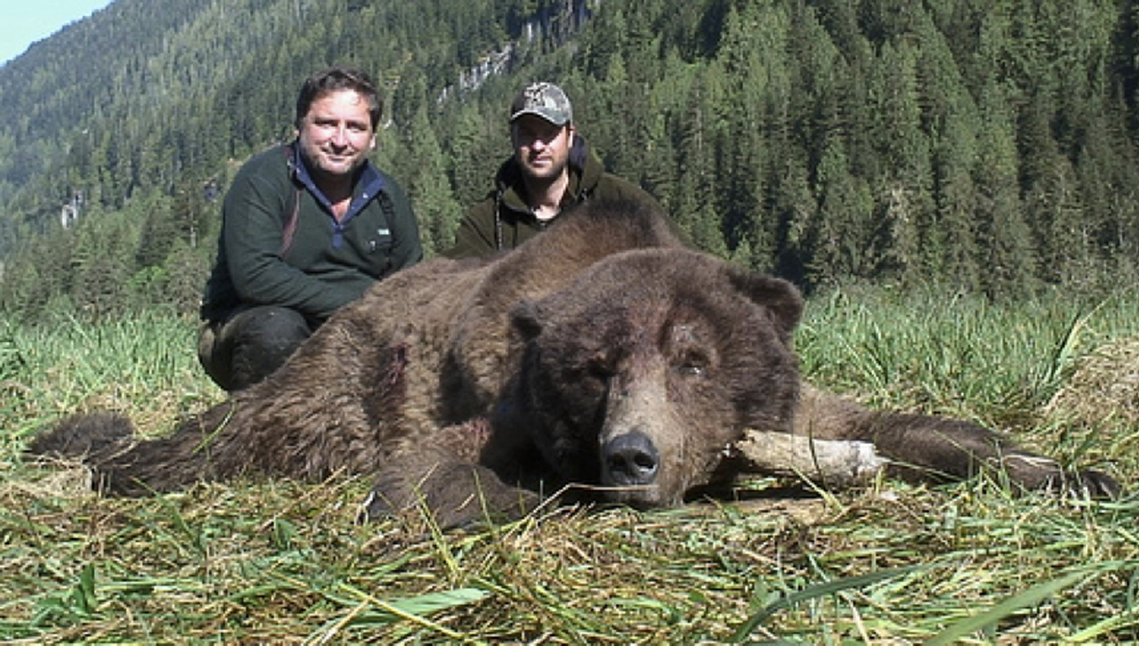 Huge Bruins: 17 Brown and Grizzly Bears from the B&C Record