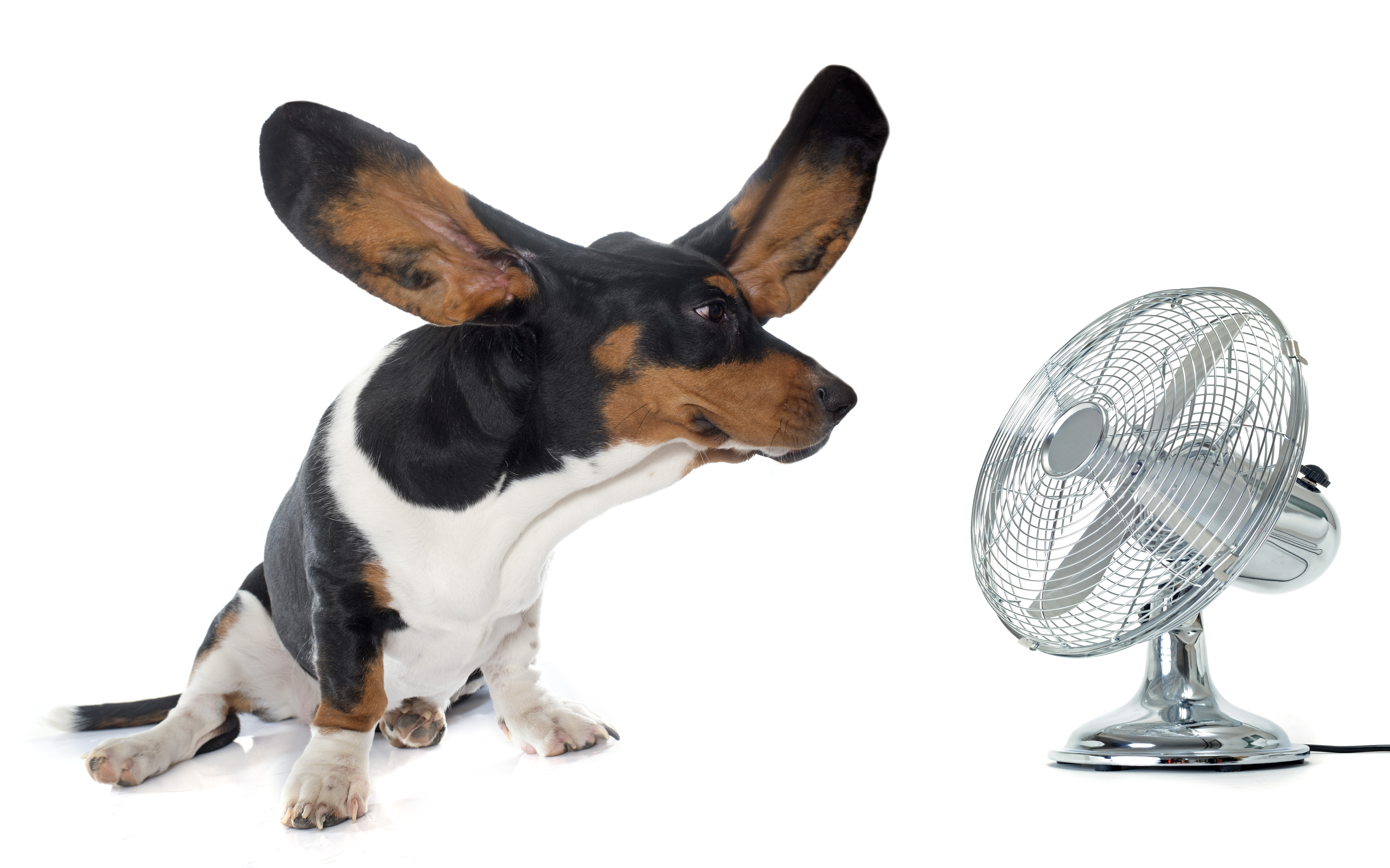 How to keep your dog cool when temperatures get hot