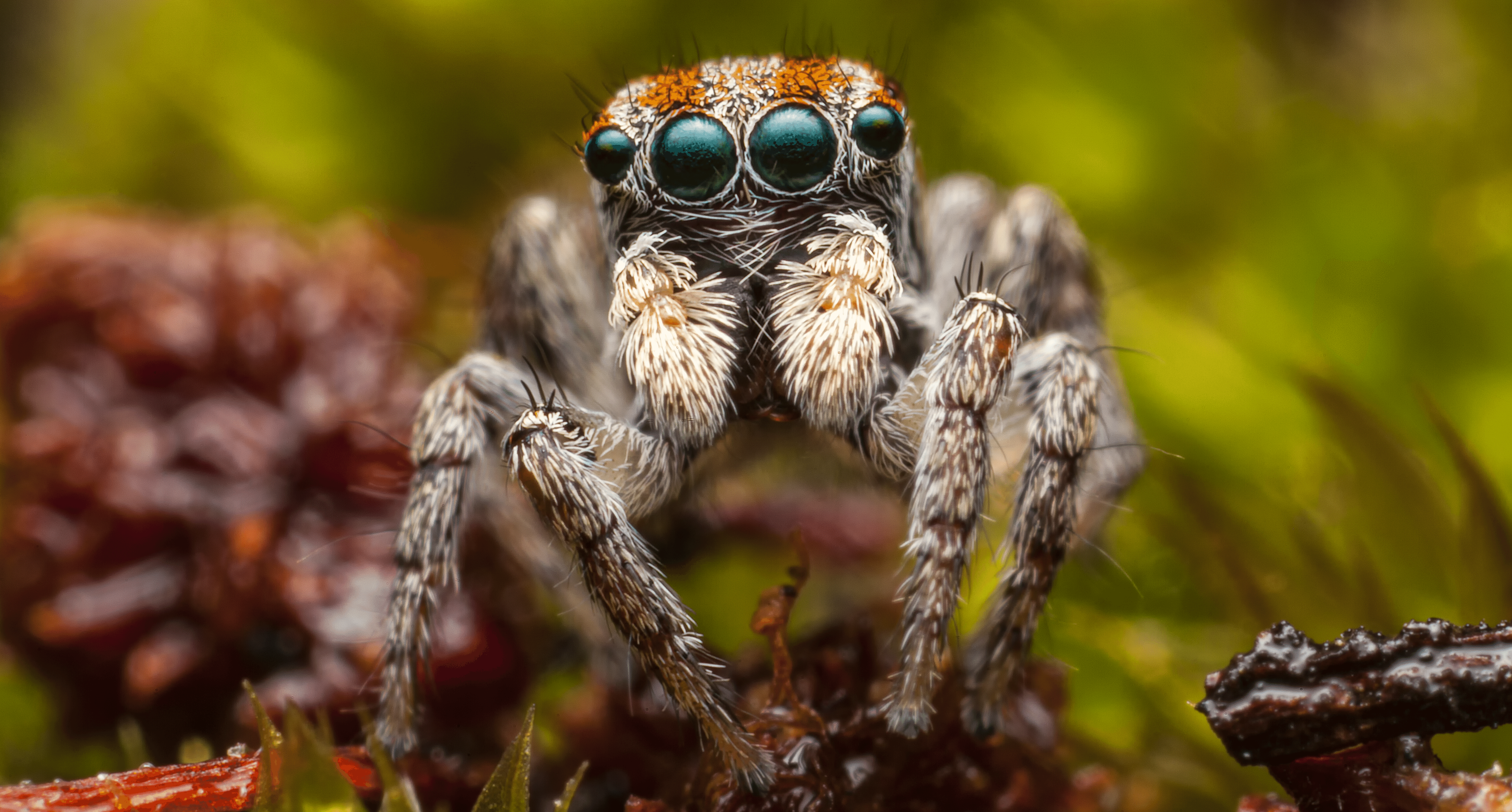 This spider's exoskeleton looks like a helmet for a very tiny alien