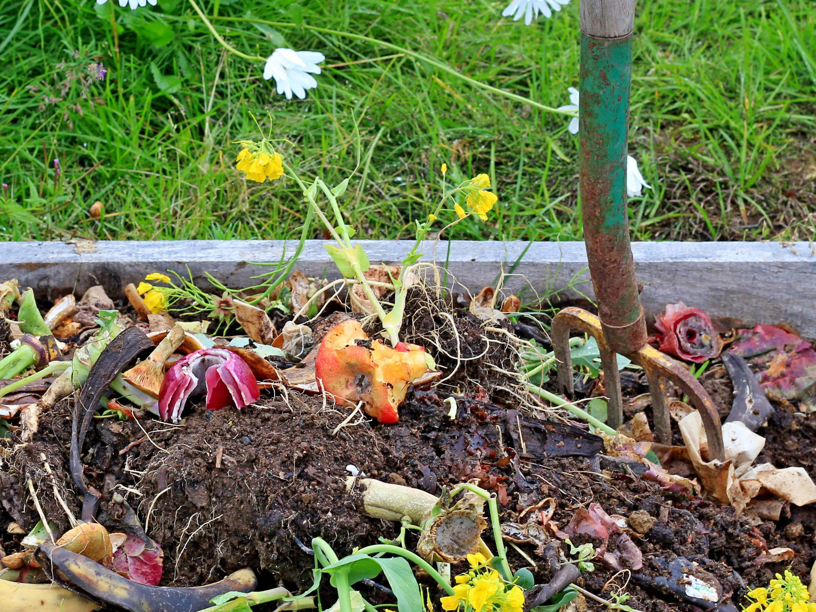 Anyone can compost their food waste (and everyone should)