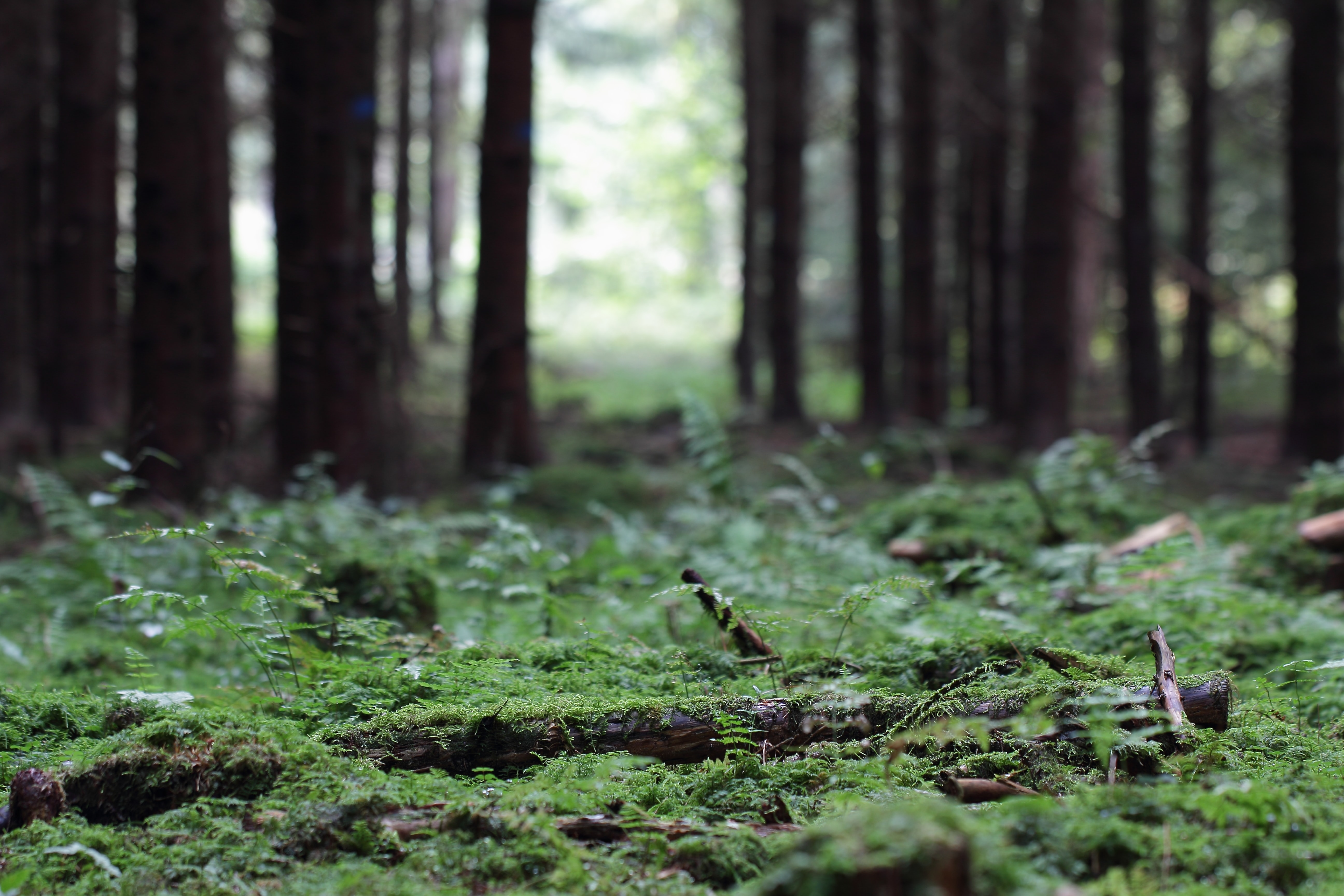 Ancient forests that power the modern world