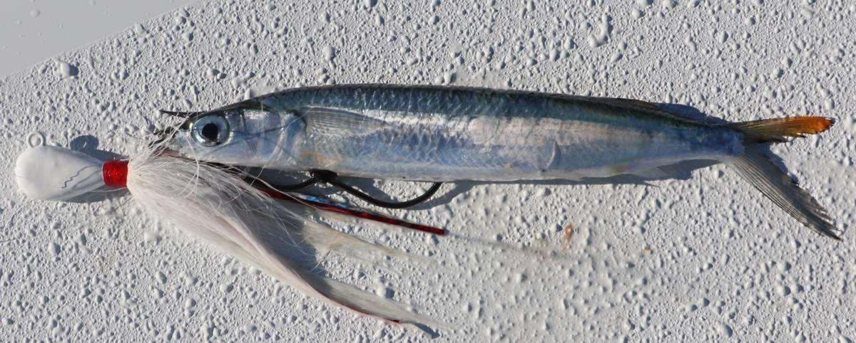 Drift-Fish Reefs Using Ballyhoo on Bucktail Jigs | Sport