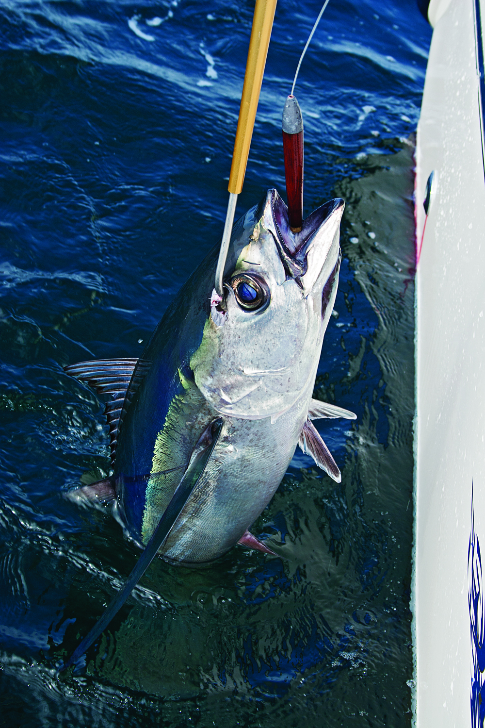Best Places to Catch Pacific Albacore | Sport Fishing Magazine