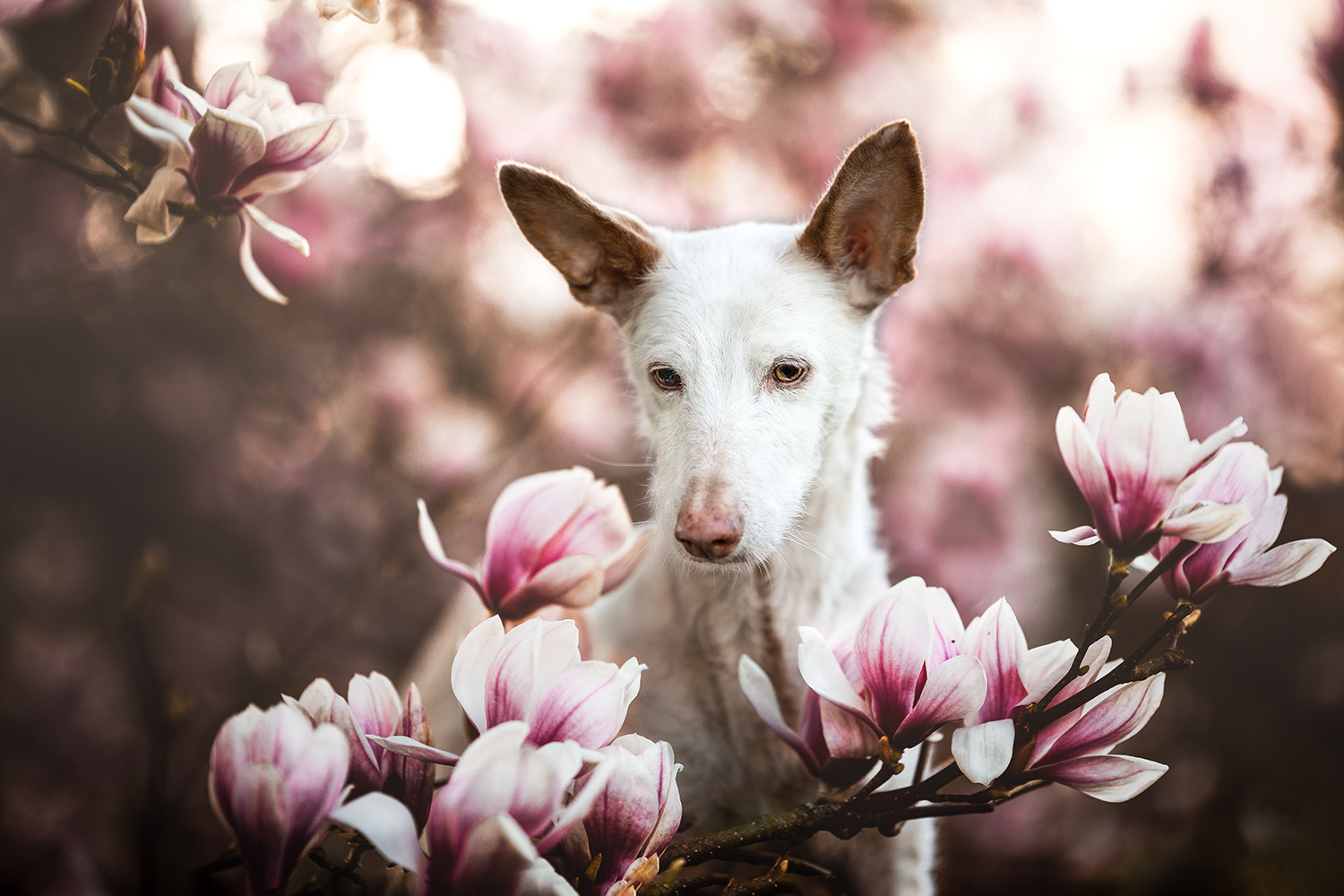 The best dog photos of 2019