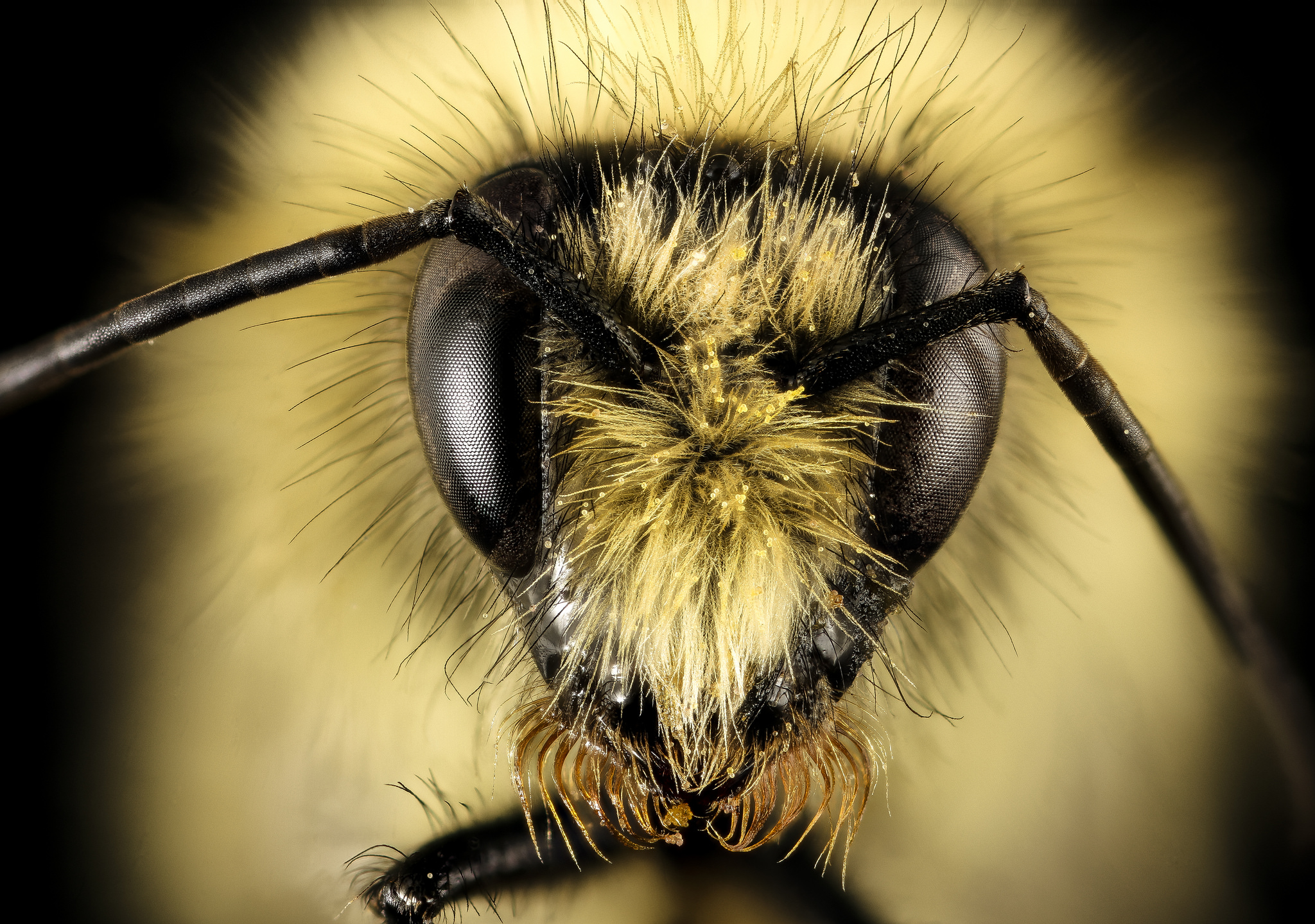 Want to know how to save the bees?
