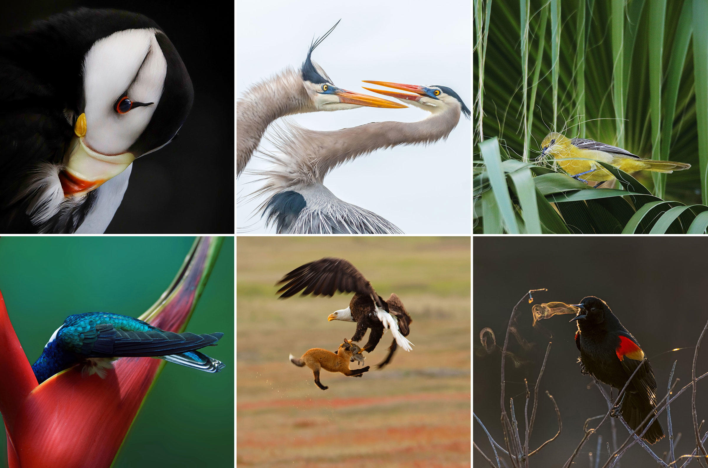 winning photos from The Audubon Society annual photography competition