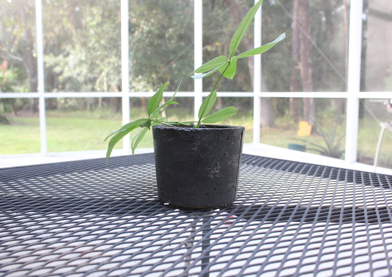 Make your own concrete flower pots