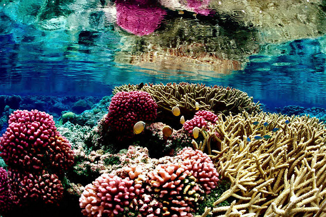 Nano-Sized Synthetic Coral Could Suck Up Ocean's Pollutants