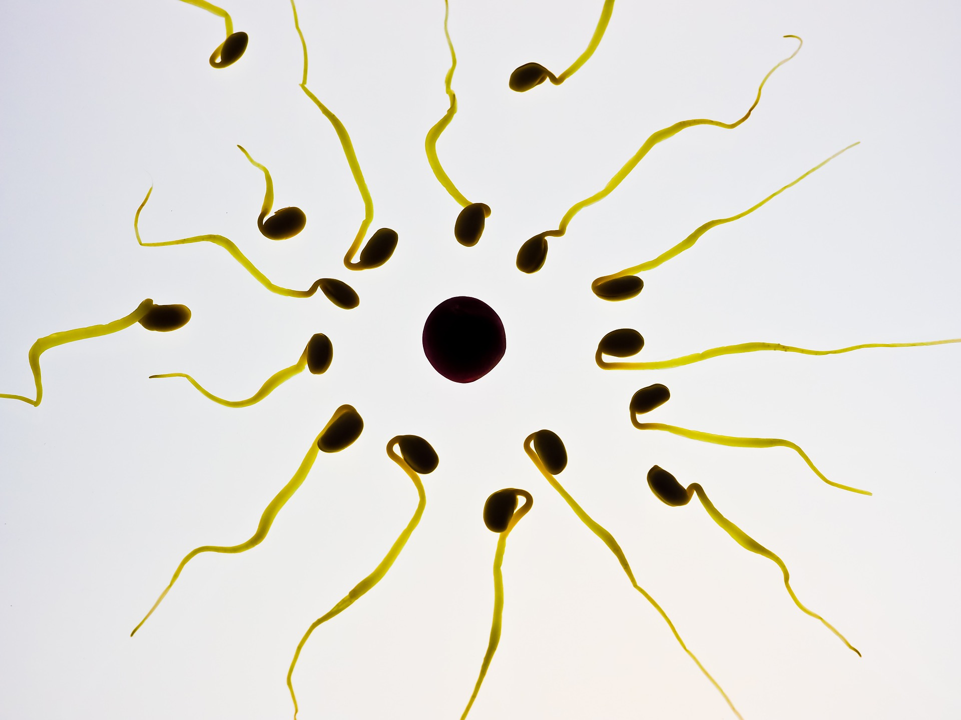 A Chinese folk contraceptive could give rise to unisex 'molecular condoms'