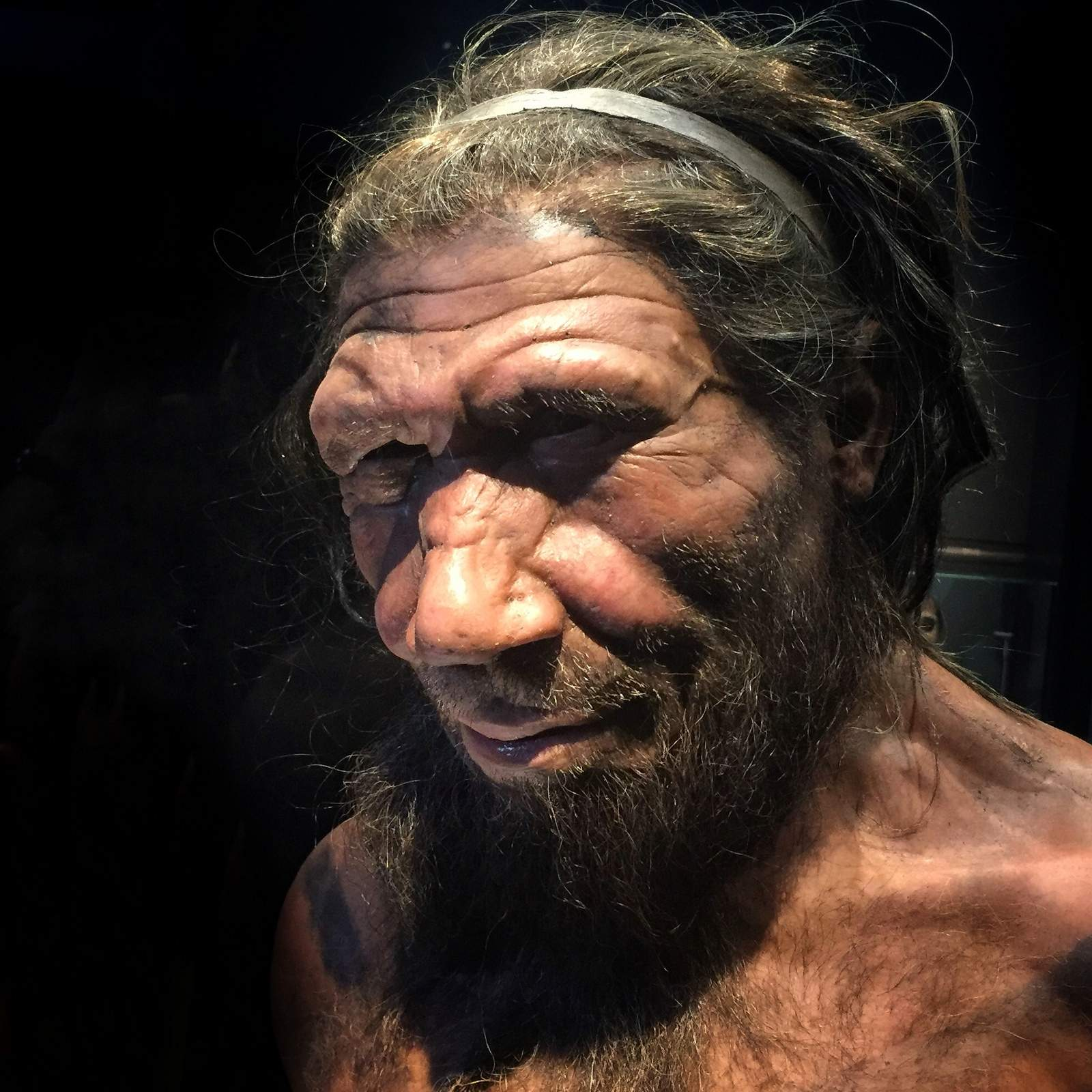 Early humans hooked up with other species a whole bunch