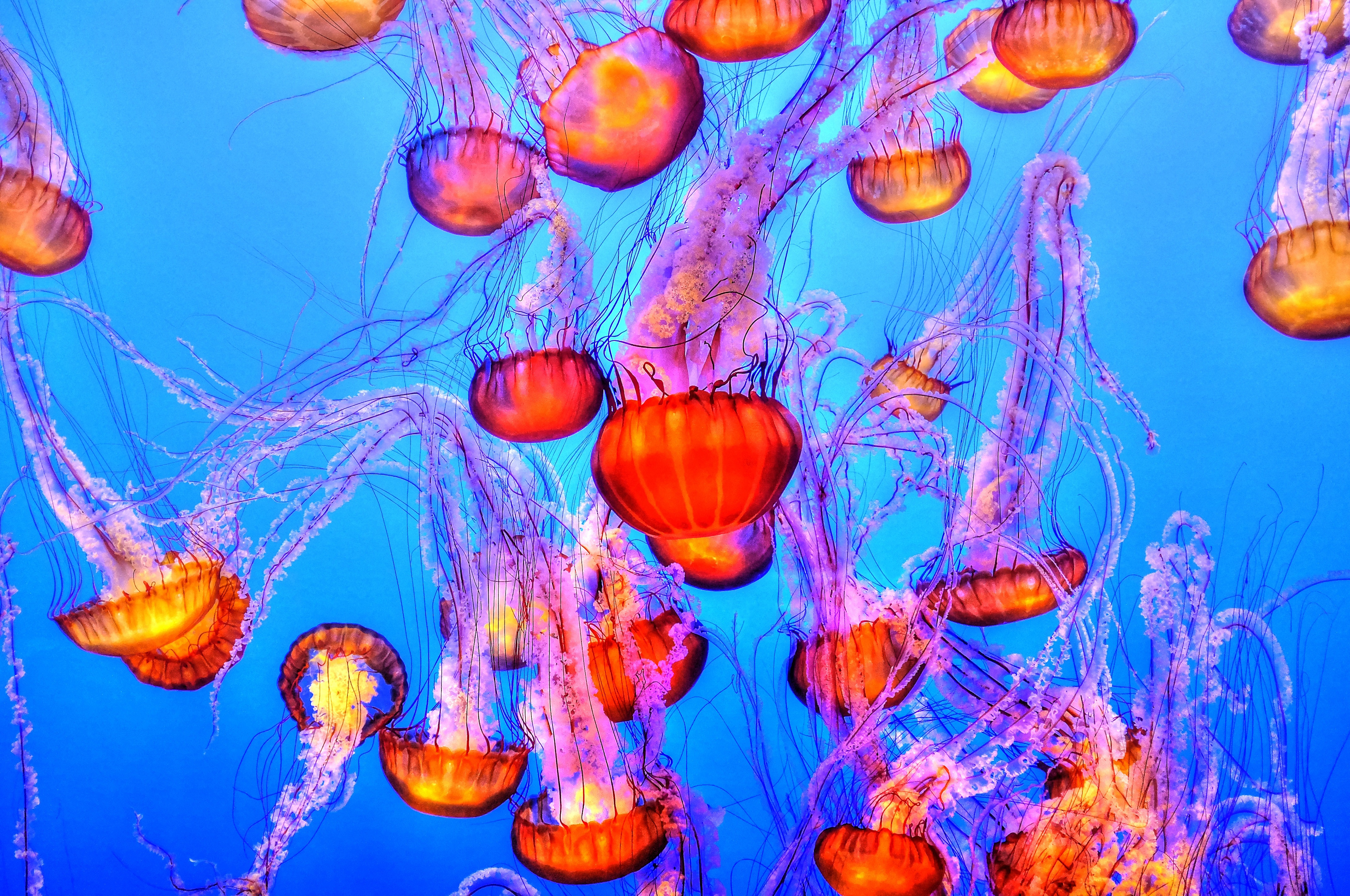 You're treating jellyfish stings all wrong | Popular Science