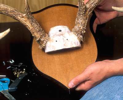 Mount Your Own Deer Antlers | Outdoor Life