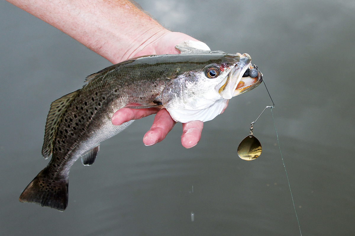 How to Fish Spinnerbaits in Salt Water | Sport Fishing Magazine