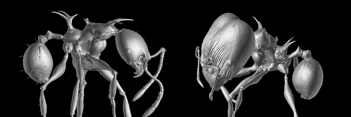 New 'Dragon' Ant Species Are Named After Game Of Thrones Characters