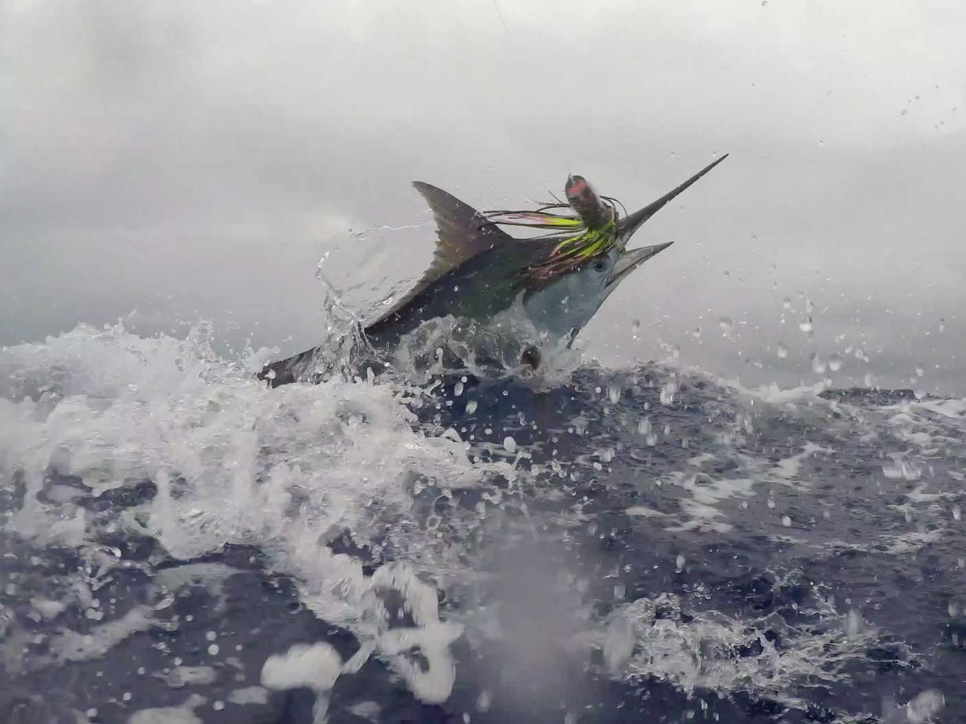 Natural Bait Versus Artificial Lures for Marlin   Marlin