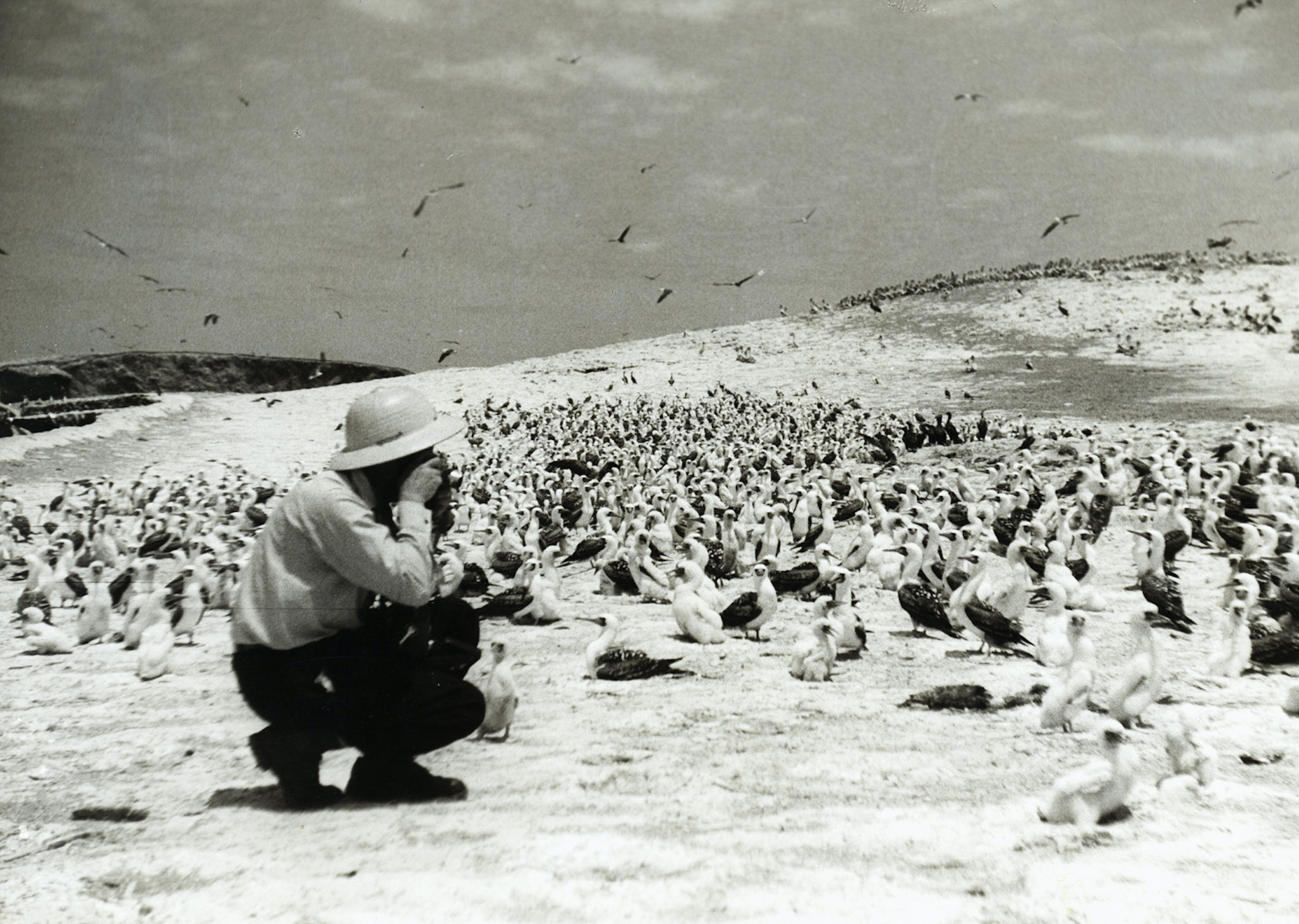 At the height of the Peruvian guano boom, people mined poop instead of gold