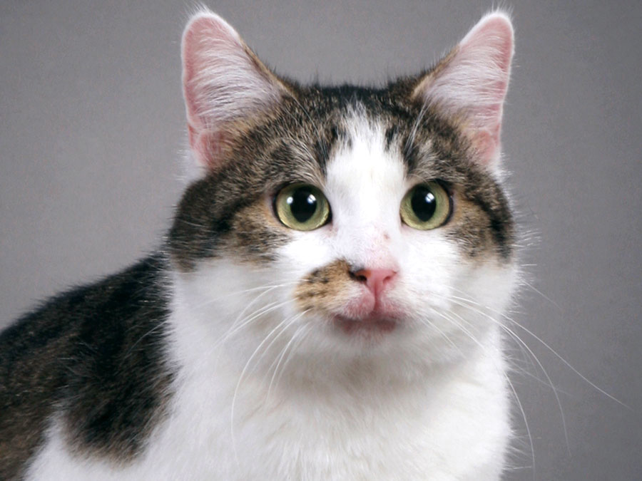 The 11 Most Important Cats Of Science