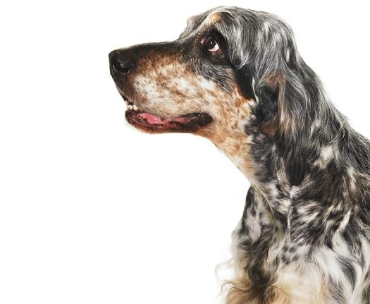 Dogs Watch Human Interactions To Assess Quality Of Treats
