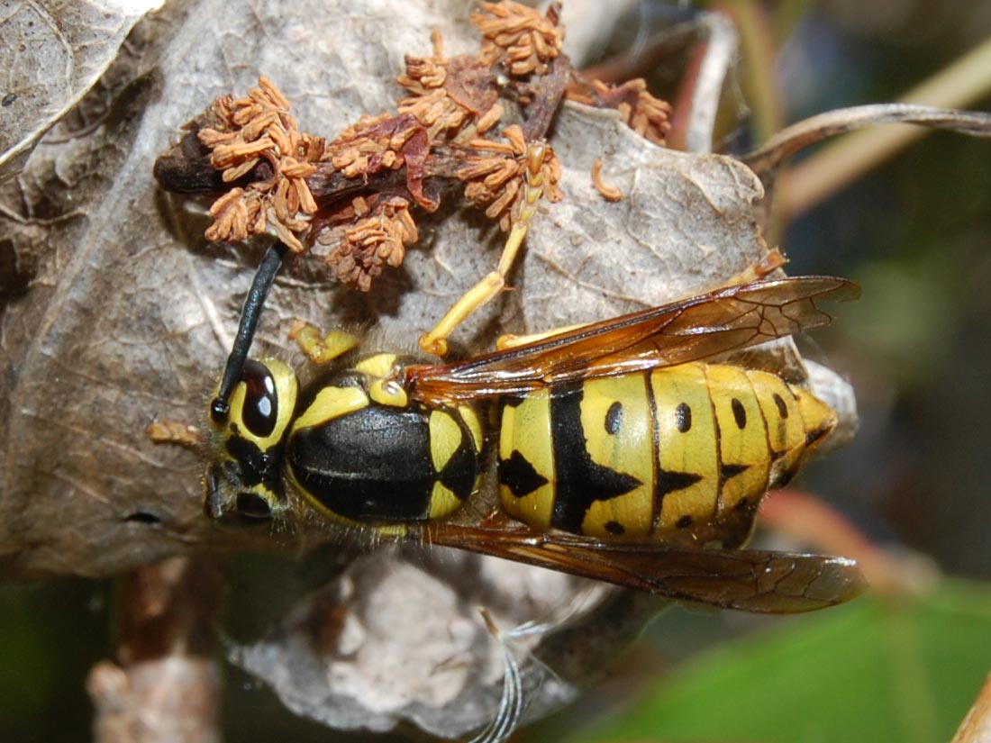 The 10 Worst Insect Stings in the Wild | Field & Stream