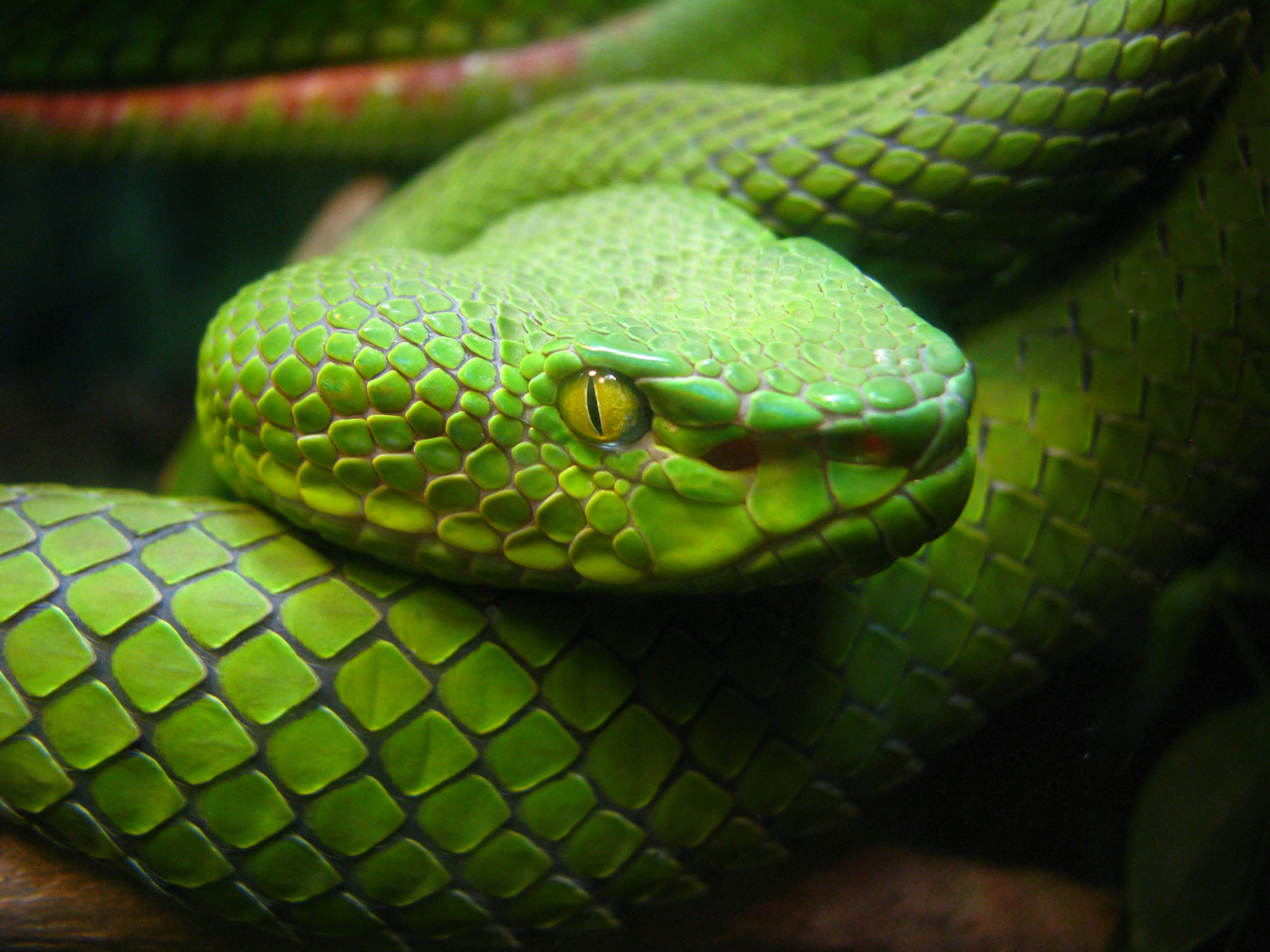 Why Doesn't Ireland Have Snakes? | Popular Science