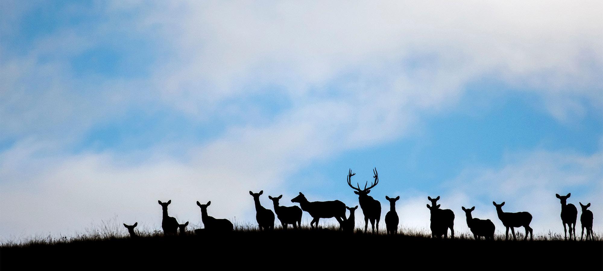 Top 10 DIY Western Hunts | Outdoor Life