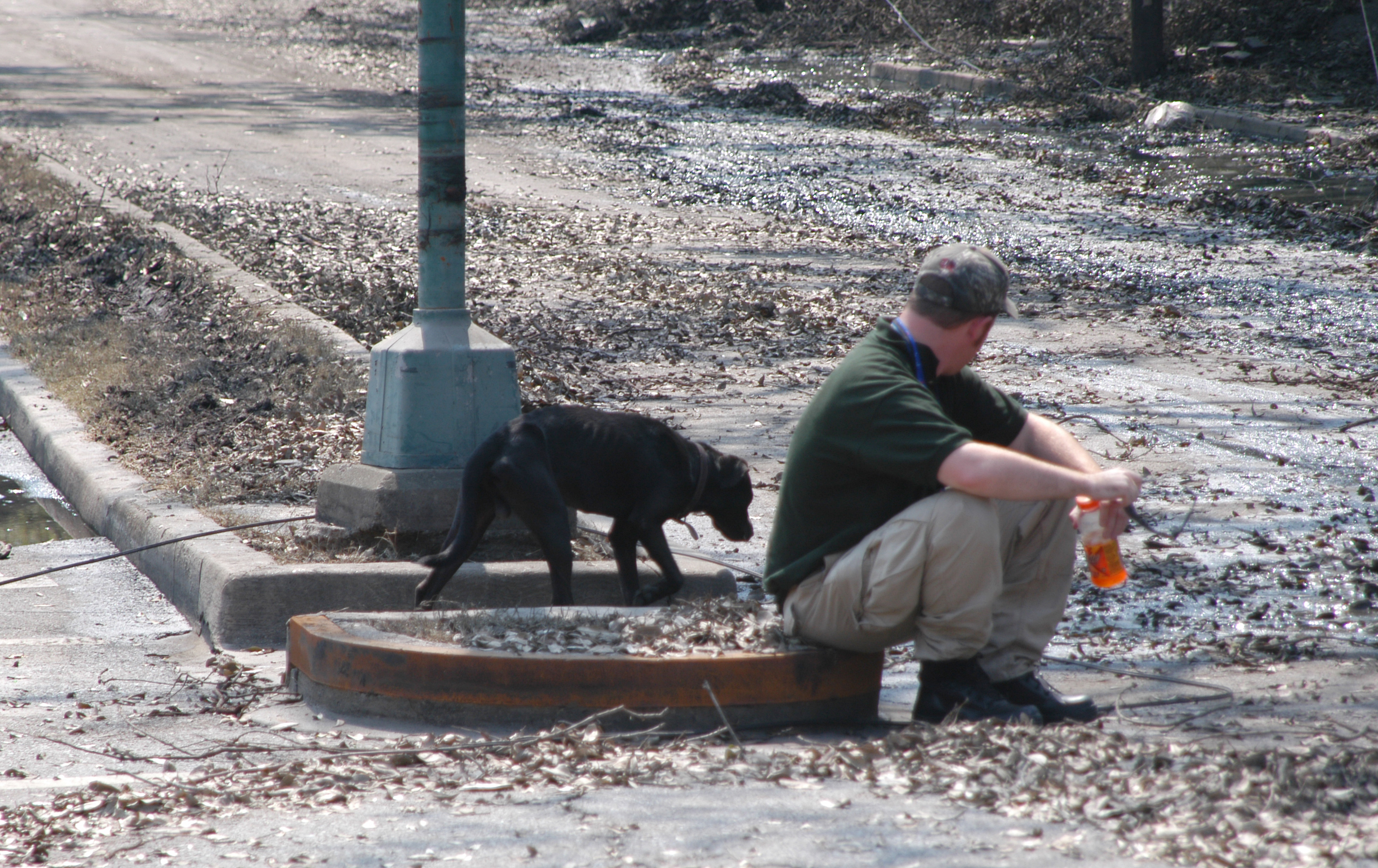 What to do with your pet if you need to evacuate | Popular