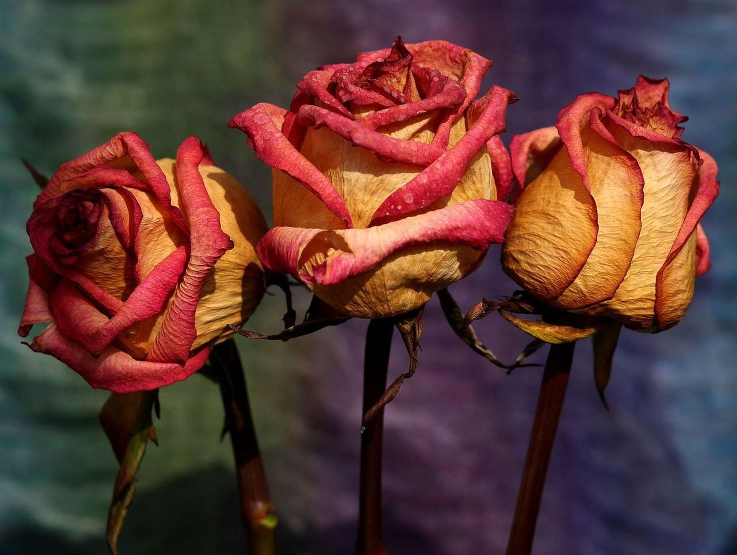 The Best Ways To Preserve Your Flowers Popular Science