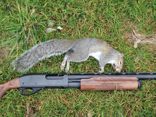 The Tree Squirrel Slam: How a Small-Game Biologist Tagged All 8 U S
