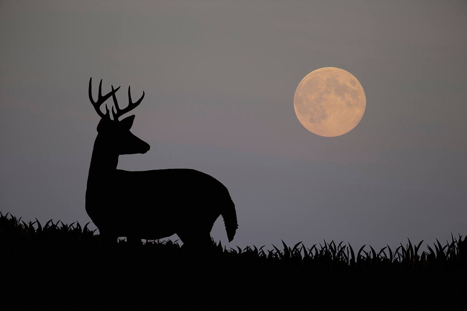 Best Time To Hunt Deer Moon Phase 2020 How Moon Phases Will Impact Deer Hunting During the Rut this