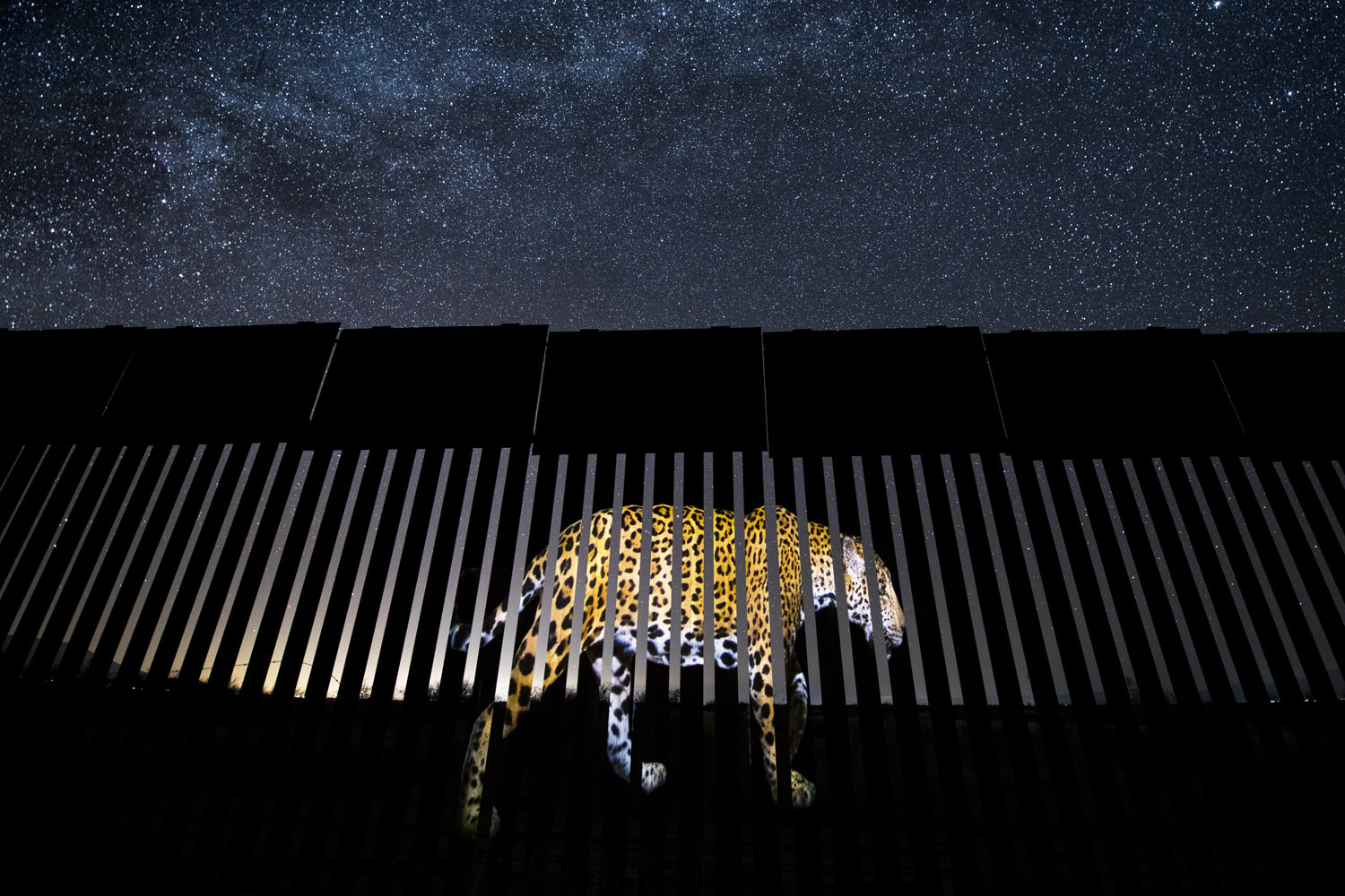 The most astonishing wildlife photos of 2019 range from meme-able to political