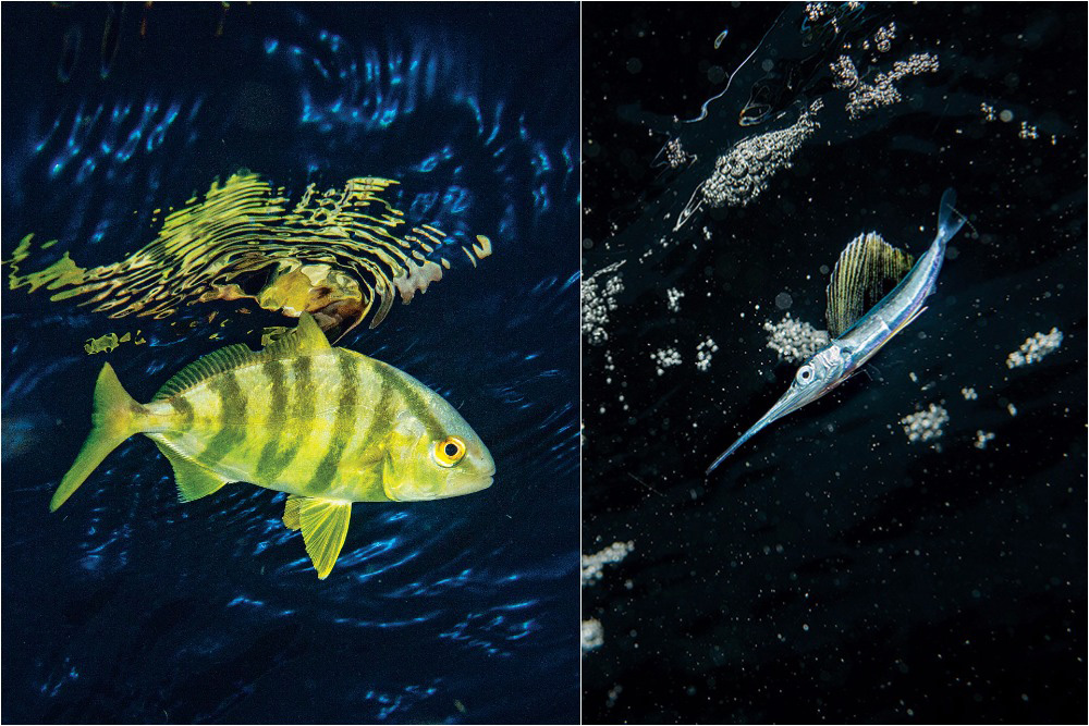 How Do Fish Have Sex and Reproduce? | Sport Fishing Magazine