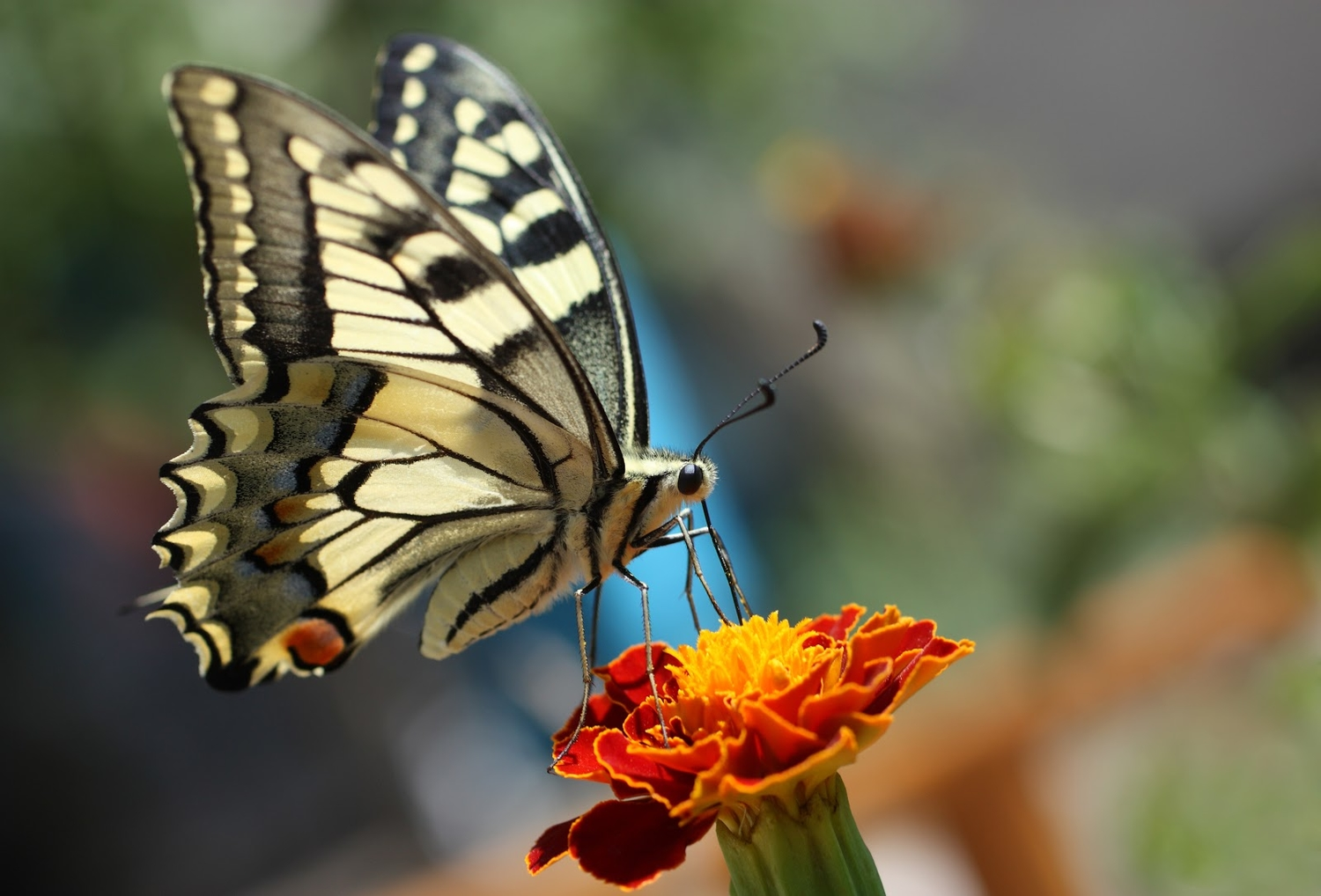A beginner's guide to butterfly watching