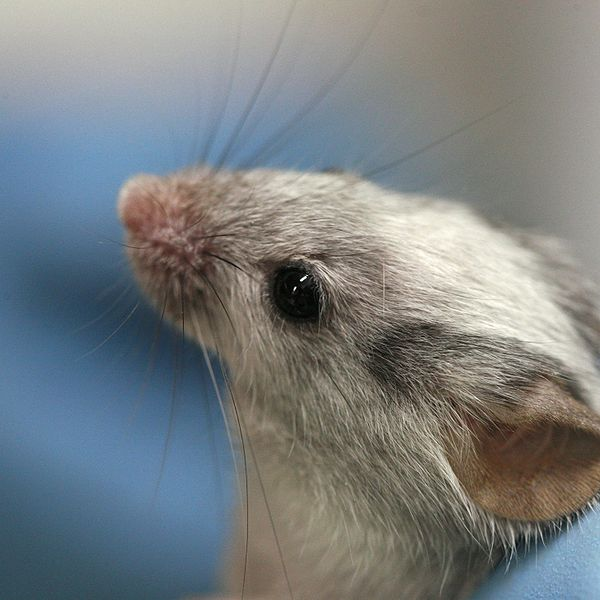 Taste Receptors Found In Mouse Testicles. Tasticles?