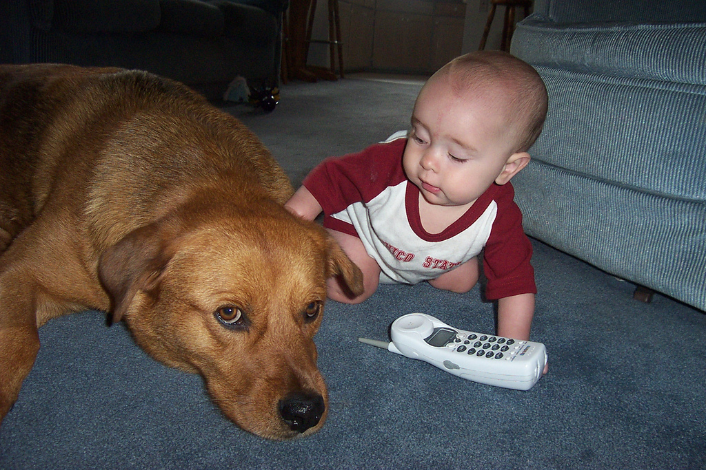 Why Your Dog Is Smarter Than My Baby