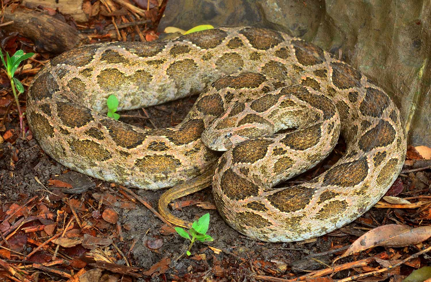 10 of the Most Venomous Snakes in the World | Field & Stream