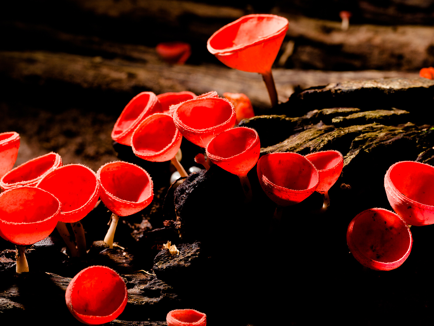 Ancient fungi may have laid the groundwork for complex life